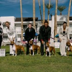 2011 STCA National Stud Dog
