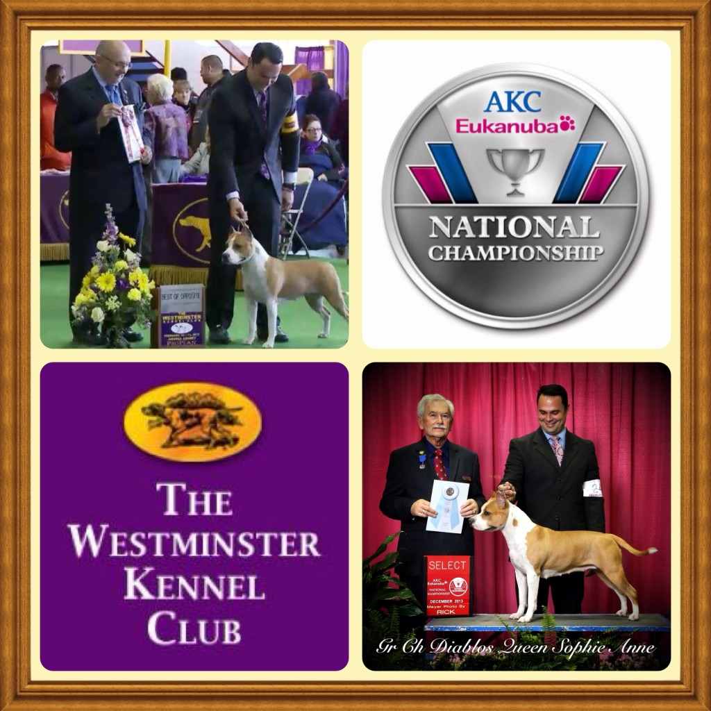 westminstershow