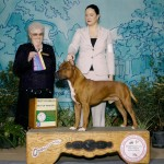 "Diablos Its About Time ""Mufasa"" Best of Breed/Best of Winners"