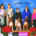 Rolex, Sushi, & Mufasa Group 3 in Eukanuba Breeder Stakes