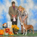 Ch. Michl R Showing Miss Dayzee 1st Place National 7-9 Year Veteran