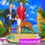"Ch. Diablos Forever In Time ""Godric"" Winners Dog/Best of Winners at Eukanuba Cluster"
