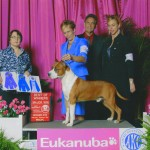 "Ch. Diablos Forever In Time ""Godric"" Winners Dog/Best of Winner for 5 point Major at Eukanuba National Specialty"