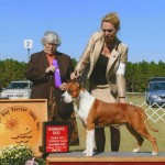 Ch. Diablos Forever In Time Winners Dog at Tampa Bay Terrier Specialty
