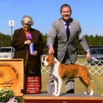 Diablos Queen Sophie Anne WB/BOW at Tampa Bay Terrier Specialty